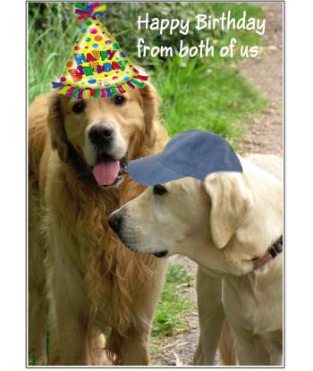 Birthday Card Dogs HBFB