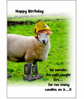 Birthday Card Sheep Kuthbert