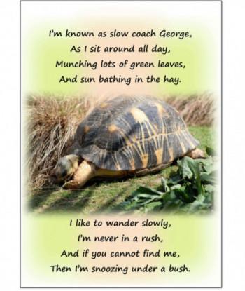 Birthday Card Tortoise George