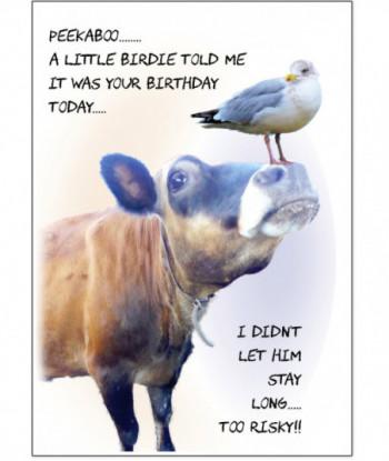 Birthday Card Seagull Peekaboo