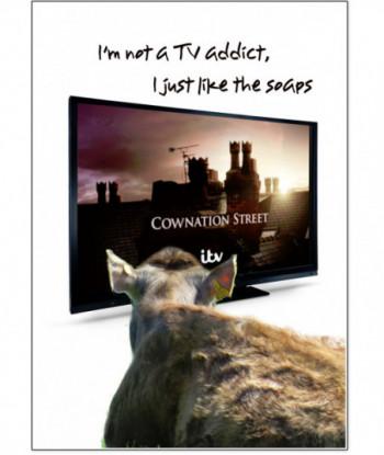 Birthday Card TV Addict