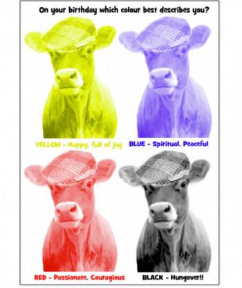 Birthday Cow Card OYB2