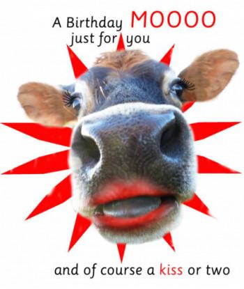 Birthday Cow Card All Eyes