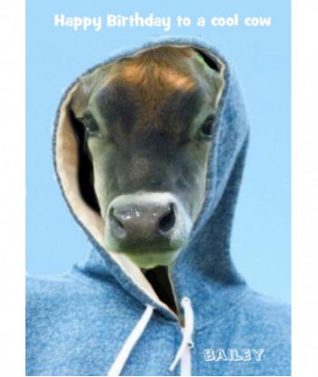 Birthday Cow Card Bailey