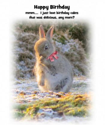 Rabbit Birthday Card HB2