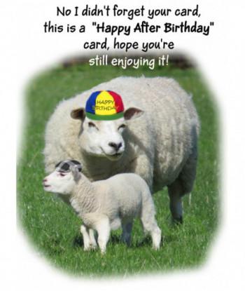 Birthday Card Sheep HAB