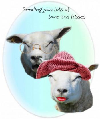Birthday Card Sheep SYL1