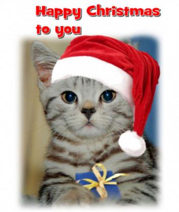 Christmas Card Cat HC