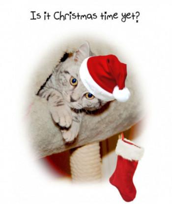 Christmas Card Cat IIC