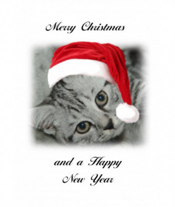 Christmas Card Cat MC
