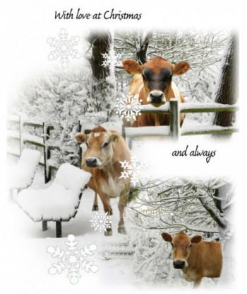 Christmas Card Cow WLAC