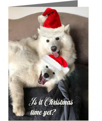 Christmas Card Dogs