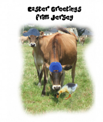 Easter Humorous Jersey Cow...