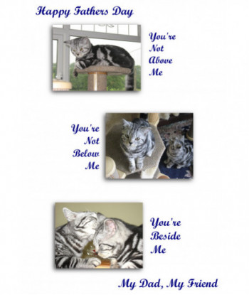 Father's Day Cat Card FDCA1