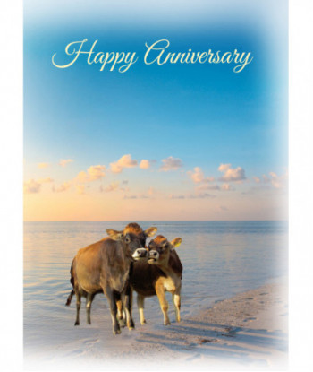 Anniversary Card Jersey Cow...