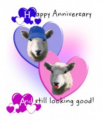Anniversary Card Sheep HA1