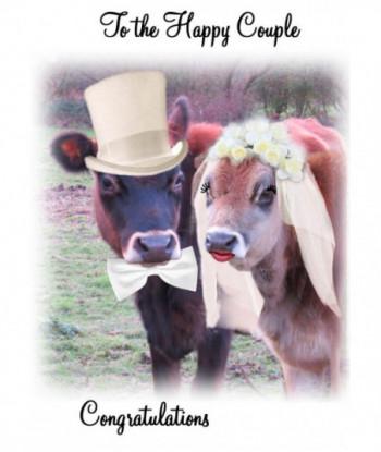 Wedding Card Cow FA1