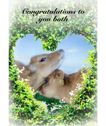 Wedding Card Jersey Cow CO2