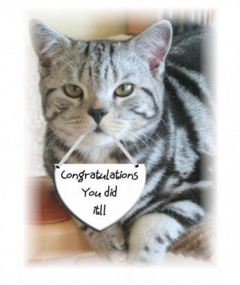 Congratulations Card Cat CO1