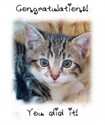 Congratulations Card Kitten...