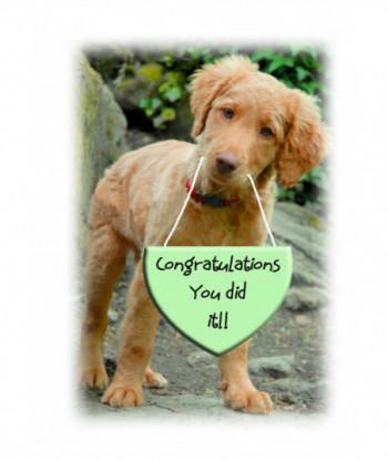 Congratulations Card Puppy CO3