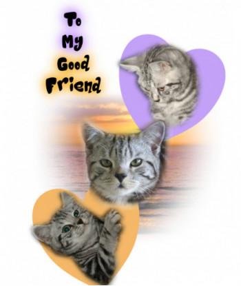 Friendship Card TMBF