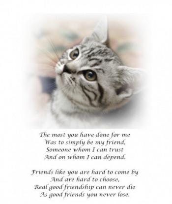 Friendship Card TMY01