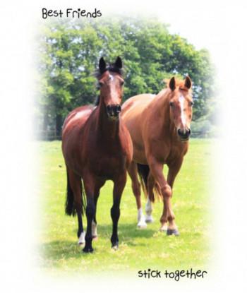 Friendship Card Horse BFST