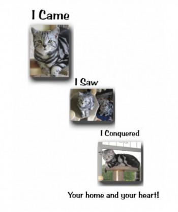 Cat Card ICIS01