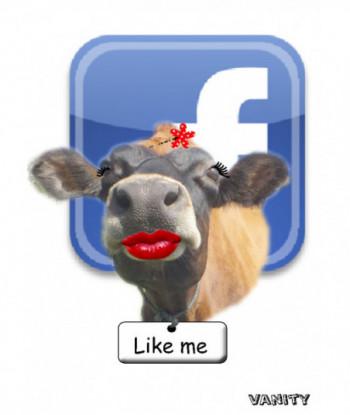 Cow Card Vanity