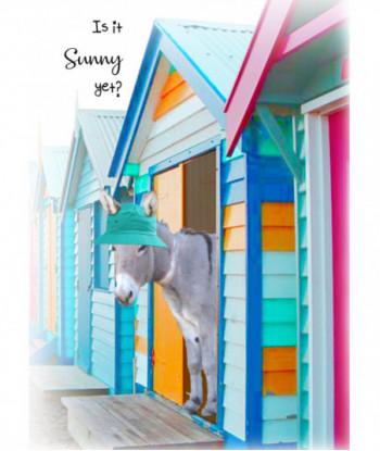 Donkey Card IISY