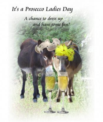 Donkey Card Sunshine