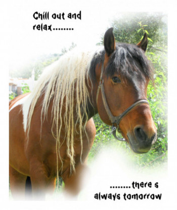Horse Card COAR