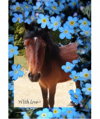 Horse Card WT1