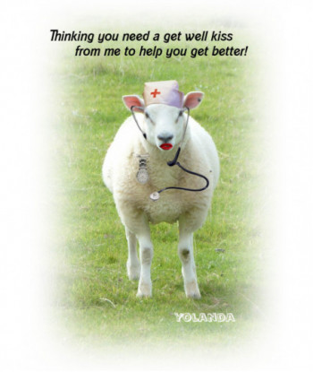 Get Well Card Sheep Yolanda