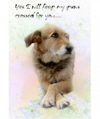 Good Luck Card Dog Crossed...