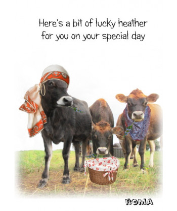 Good Luck Cow Card Roma