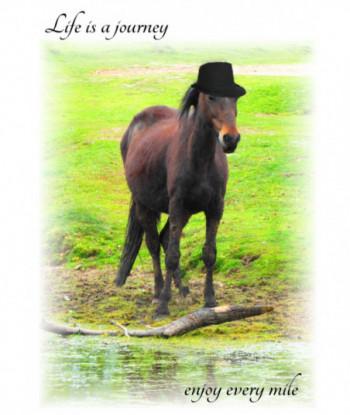 Inspirational Card Horse WW2
