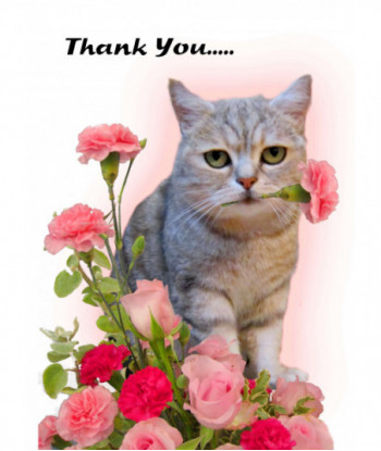 Thank You Card Cat TY1