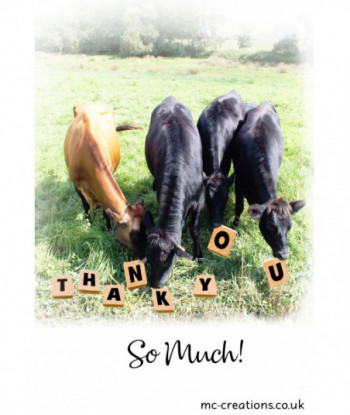 Thank You Card Cow TY1
