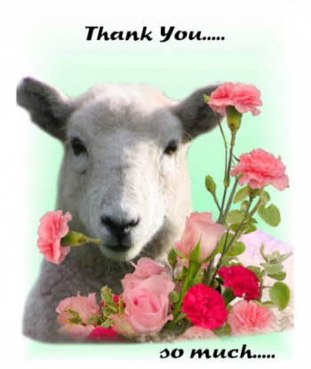 Thank You Card Sheep TY1