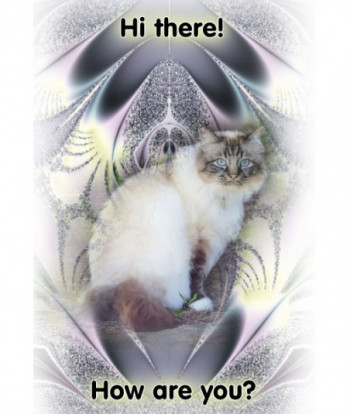Thinking About You Card Cat