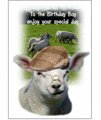 Birthday Card Sheep GFJ2