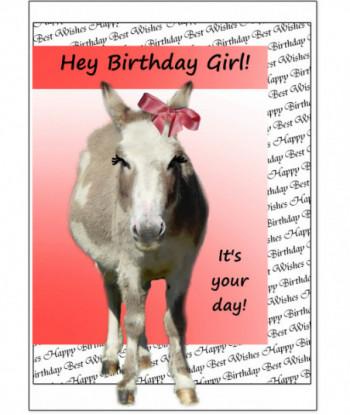 Birthday Card Donkey BG2