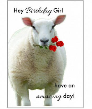 Birthday Card Sheep BG4